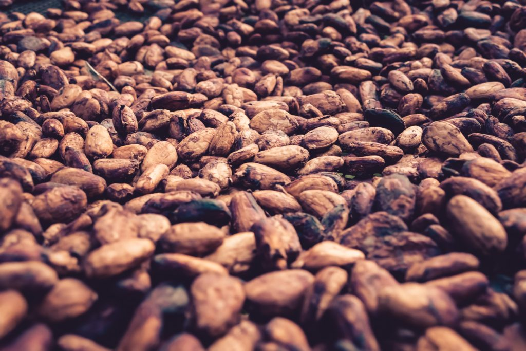 cocoa beans for chocolate quiz