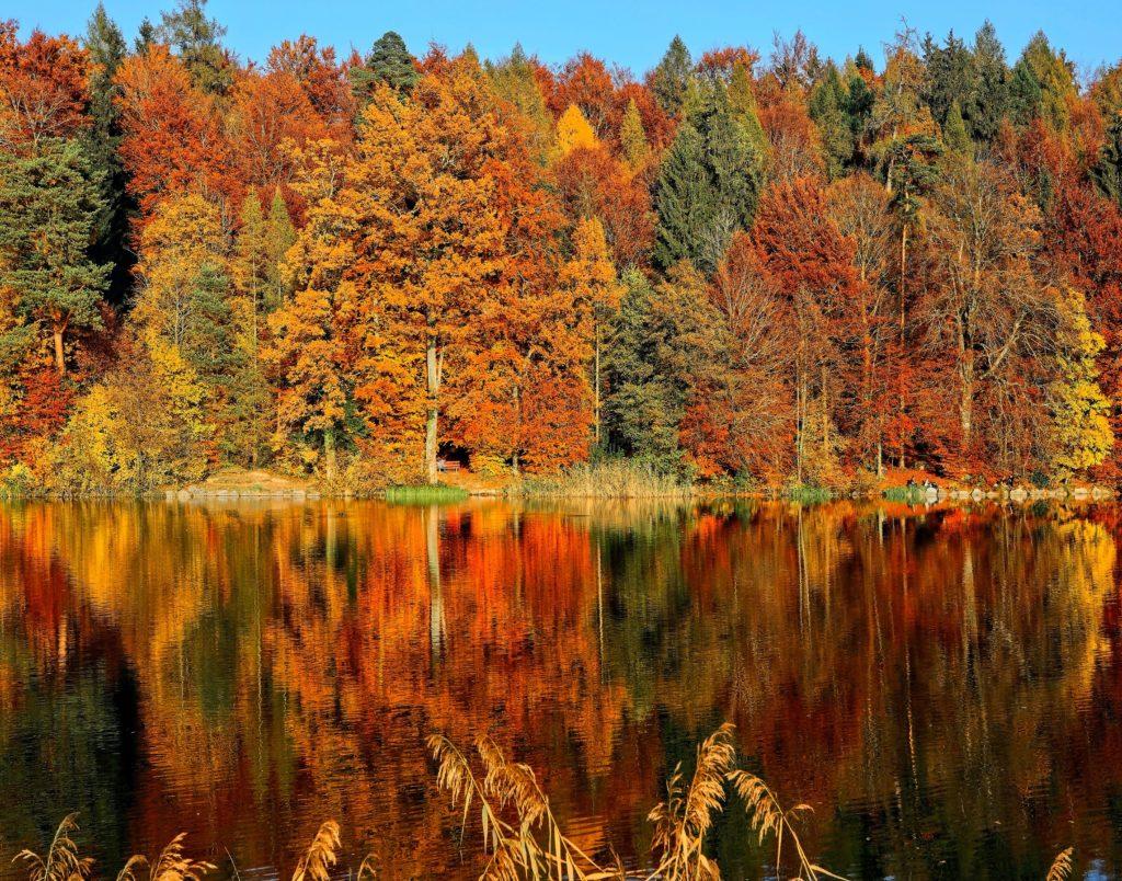 autumn season trees