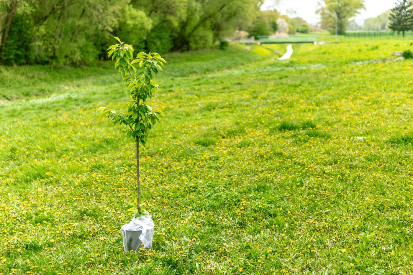Why you should get involved in tree planting