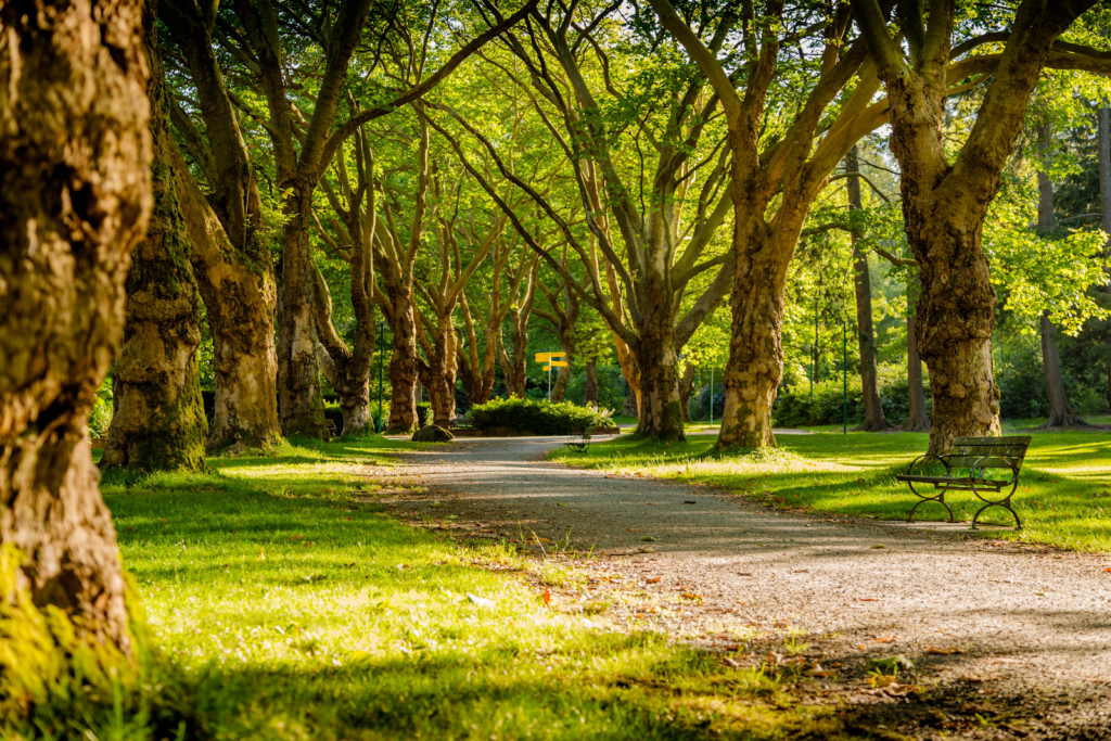A green park with trees lined along a path
