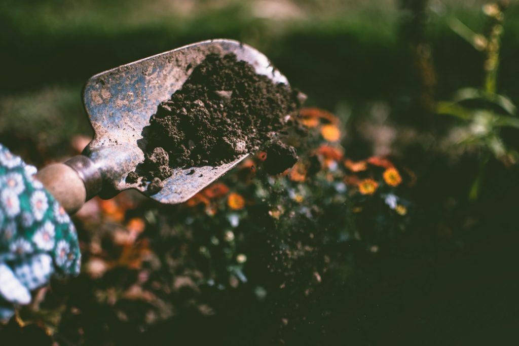 Trowel sprinkling soil on plants