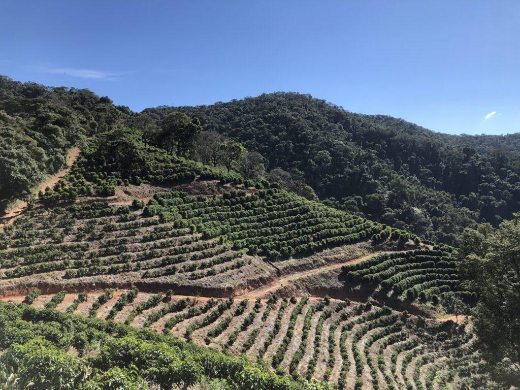 Coffee farm in Brazil