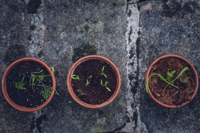You can reuse coffee grounds for your plants